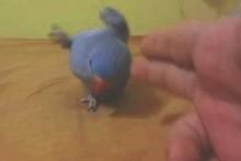 DIY-Play-Dead-Bird-Trick