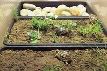DIY-Rotating-Tray-Habitat