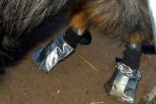 Duct-Tape-Dog-Boots