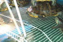 Wire-Shelf-Turtle-Dock
