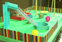 DIY-Hamster-Playground