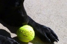 DIY-Monogram-Tennis-Ball