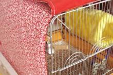 DIY-Winter-Birdcage-Cover