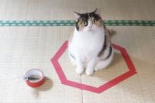 DIY-Cat-Circle-Trap