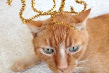 DIY-Cat-New-Year-Headband