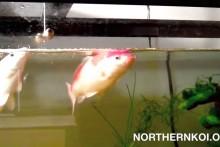 DIY-Dangling-Fish-Bell