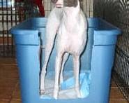 DIY-Dog-Litter-Box-Training