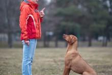 DIY-Dog-Sit-Training
