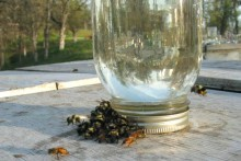Jar-Bee-Feeder