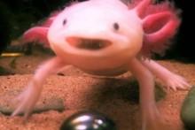 Stone-Salamander-Keepsake