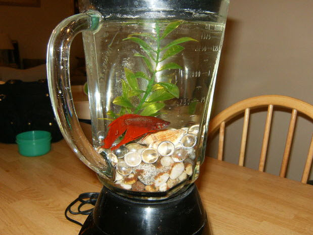 Diy Blender Fish Tank