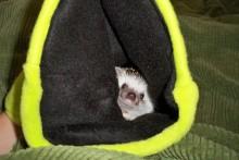 DIY-Hedgehog-Sleeping-Bag