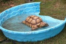 DIY-Large-Tortoise-Pool