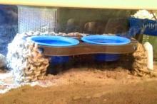DIY-Pet-Bowls-Crab-Pools