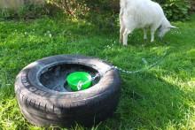 DIY-Tire-Goat-Anchor