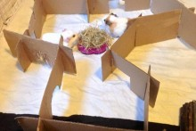 DIY-Cardboard-Maze