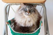 DIY-Macrame-Cat-Hammock