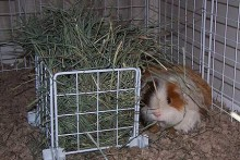Grid-Panel-Hay-Rack