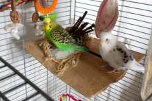 DIY-Bird-Couch