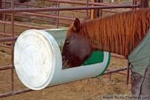 DIY-Barrel-Horse-Feeder