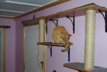 DIY-Cat-Wall
