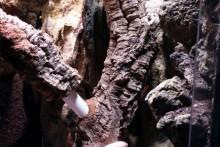 DIY-Cork-Tubes-Tree