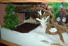 DIY-Second-Substrate-Pit