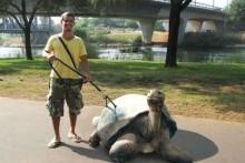 Suction-Cup-Tortoise-Leash