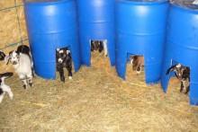 DIY-Barrel-Goat-Kid-Bed