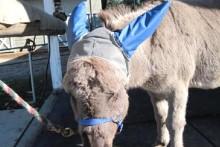 DIY-Equine-Ear-Muffs