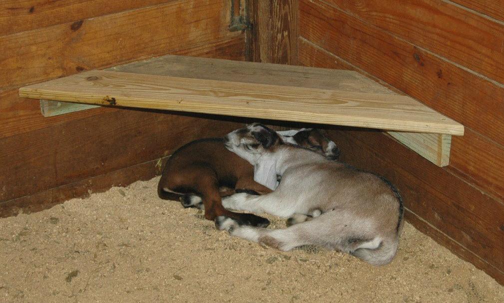 Diy Goat Barn Kid Shelter Petdiys Com