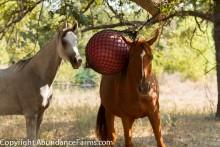 DIY-Net-Ball-Horse-Toy