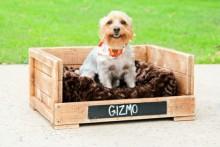 DIY-Wood-Dog-Box-Bed