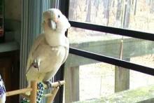 DIY-Bird-E-Collar