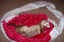 DIY-Ferret-Sling-Carrier