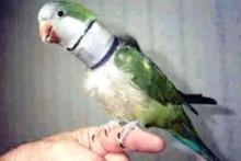 DIY-Foam-Bird-Collar