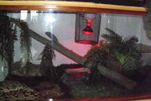 DIY-Heat-Lamp-Cage