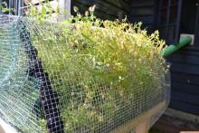 DIY-Outdoor-Hamster-Garden
