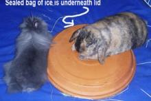 DIY-Rabbit-Cooling-Platform