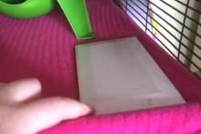 DIY-Rodent-Cooling-Tile