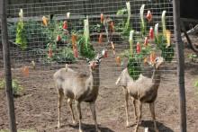 DIY-Vegetable-Feeder-Rack