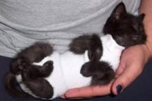 Sock-Kitten-Diaper