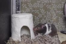 Toilet-Paper-Hamster-Hut