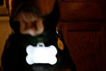 DIY-Dog-Glow-Light