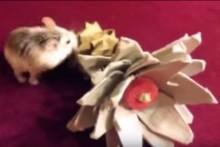 DIY-Flower-Hamster-Chew-Toy