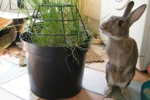 DIY-Potted-Rabbit-Plants