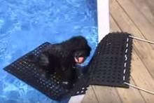 DIY-Rubber-Mat-Pool-Ramp