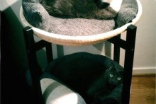 Tray-Table-Cat-Condo