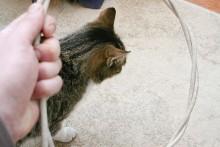 DIY-Cat-Hoop-Jump-Training