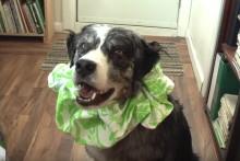 DIY-Dog-Clown-Collar